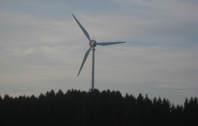 Wind und Wald